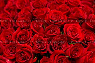Огромный букет алых роз. Стоковое фото, фотограф Александр Подшивалов / Фотобанк Лори