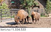 Купить «Зоопарк в городе Калининград», фото № 1334533, снято 19 сентября 2008 г. (c) Parmenov Pavel / Фотобанк Лори