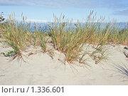 Купить «Балтийское побережье», фото № 1336601, снято 18 сентября 2008 г. (c) Parmenov Pavel / Фотобанк Лори