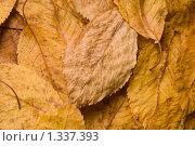 Купить «Осенние листья», фото № 1337393, снято 25 декабря 2009 г. (c) Влад  Плотников / Фотобанк Лори