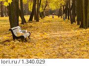 Осенняя аллея. Стоковое фото, фотограф Александр Алексеев / Фотобанк Лори