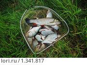 Купить «Рыба в посадчике», фото № 1341817, снято 11 июля 2009 г. (c) Наталия Евмененко / Фотобанк Лори