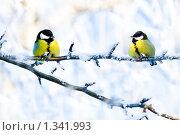 Купить «Синицы на фоне заснеженных деревьев», фото № 1341993, снято 3 января 2010 г. (c) Евгений Захаров / Фотобанк Лори