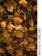 Осенние листья. Стоковое фото, фотограф Толкачёв Евгений / Фотобанк Лори