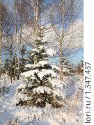 Купить «Лесная опушка. Зима», фото № 1347437, снято 4 января 2010 г. (c) Наталья Волкова / Фотобанк Лори