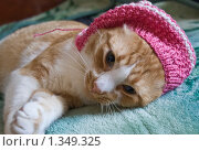 Кот в шапочке. Стоковое фото, фотограф Роман Смирнов / Фотобанк Лори