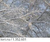 Снег на ветках. Стоковое фото, фотограф Вячеслав Маслов / Фотобанк Лори
