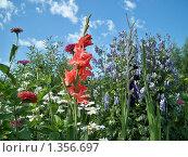 Цветы на фоне синего неба. Стоковое фото, фотограф Сергей Шихов / Фотобанк Лори