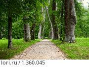 Купить «Аллея А. П. Керн. Пушскинские горы», фото № 1360045, снято 7 августа 2009 г. (c) Мария Лобанова / Фотобанк Лори