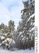 Зимний лесной пейзаж. Стоковое фото, фотограф Сергей Матвеев / Фотобанк Лори