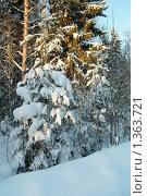 Лес. Стоковое фото, фотограф Омельян Светлана / Фотобанк Лори