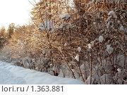 Колея. Стоковое фото, фотограф Омельян Светлана / Фотобанк Лори
