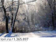 Купить «Морозный день», фото № 1365897, снято 12 января 2010 г. (c) Никонор Дифотин / Фотобанк Лори