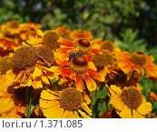 Оранжевые цветы. Стоковое фото, фотограф Андрей Траханов / Фотобанк Лори