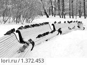Нахохлившиеся голуби сидят на скамейке в заснеженном парке. Стоковое фото, фотограф Наталия Жильцова / Фотобанк Лори