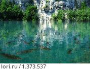 Рыбы. Стоковое фото, фотограф Сергей Зимушин / Фотобанк Лори