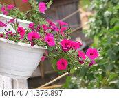Цветы в горшке. Стоковое фото, фотограф Андрей Борисов / Фотобанк Лори