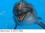 Дельфин. Стоковое фото, фотограф Николай Бескоровайный / Фотобанк Лори