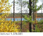 Осень. Заболоченное дерево. Стоковое фото, фотограф Вера Попова / Фотобанк Лори