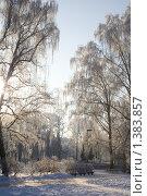 Купить «Заснеженный лес», фото № 1383857, снято 16 января 2010 г. (c) Asja Sirova / Фотобанк Лори