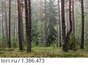 Купить «Туман в сосновом бору», фото № 1386473, снято 8 июля 2009 г. (c) Михаил Романовский / Фотобанк Лори