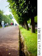 Аллея в парке без бликов. Стоковое фото, фотограф Алексей Хляпов / Фотобанк Лори