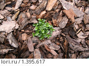 Купить «Растение в коре», фото № 1395617, снято 4 сентября 2005 г. (c) Кирюшина Евгения / Фотобанк Лори