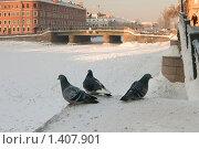Купить «Городские голуби на набережной реки. Санкт-Петербург», эксклюзивное фото № 1407901, снято 23 января 2010 г. (c) Александр Алексеев / Фотобанк Лори