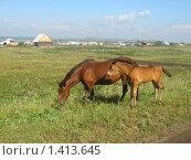 Купить «Лошади на фоне деревни», фото № 1413645, снято 5 августа 2008 г. (c) Людмила Банникова / Фотобанк Лори