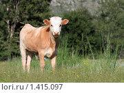 Купить «Молодой теленок в траве», эксклюзивное фото № 1415097, снято 14 июля 2009 г. (c) Яна Королёва / Фотобанк Лори