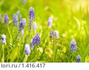 Купить «Весенние цветы», фото № 1416417, снято 27 мая 2009 г. (c) Вероника Галкина / Фотобанк Лори