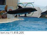 Полет дельфина. Стоковое фото, фотограф Николай Бескоровайный / Фотобанк Лори