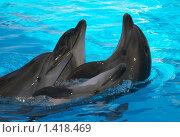 Дельфины. Стоковое фото, фотограф Кайсина Юлия / Фотобанк Лори