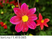 Цветок. Стоковое фото, фотограф Кайсина Юлия / Фотобанк Лори