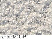 Купить «Иней. Абстрактный зимний фон.», фото № 1419197, снято 26 января 2010 г. (c) Федор Королевский / Фотобанк Лори