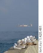 Купить «Зима на побережье Крыма», фото № 1420481, снято 26 января 2010 г. (c) Светлана / Фотобанк Лори