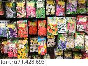 Купить «Пакетики семян цветов в магазине», эксклюзивное фото № 1428693, снято 25 апреля 2009 г. (c) Александр Щепин / Фотобанк Лори