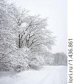 Зимний лес. Стоковое фото, фотограф Минаев С.Г. / Фотобанк Лори