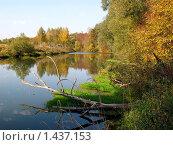 Река и желтые деревья. Стоковое фото, фотограф Александр Справников / Фотобанк Лори