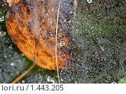 Капли росы на паутине. Стоковое фото, фотограф Ткачёва Ольга / Фотобанк Лори