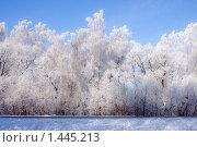 Солнечный, зимний день в лесу. Стоковое фото, фотограф Дмитрий Милехин / Фотобанк Лори