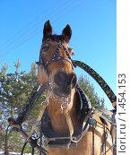 Купить «Лошадка», эксклюзивное фото № 1454153, снято 6 февраля 2010 г. (c) lana1501 / Фотобанк Лори