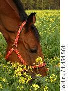 Лошадь в поле. Стоковое фото, фотограф Екатерина Стрельникова / Фотобанк Лори