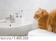 Купить «Рыжий кот на стиральной машинке», фото № 1455333, снято 7 февраля 2010 г. (c) Asja Sirova / Фотобанк Лори