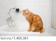 Купить «Курильский бобтейл сидит на ванне», фото № 1455361, снято 7 февраля 2010 г. (c) Asja Sirova / Фотобанк Лори