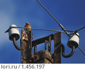 Купить «Зарянка на столбе», эксклюзивное фото № 1456197, снято 18 июня 2009 г. (c) Алёшина Оксана / Фотобанк Лори