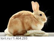 Купить «Кролик», фото № 1464293, снято 15 апреля 2009 г. (c) Александр Паррус / Фотобанк Лори