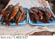 Купить «Копченая рыба», эксклюзивное фото № 1469537, снято 8 апреля 2009 г. (c) Алёшина Оксана / Фотобанк Лори