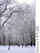 Зима. Стоковое фото, фотограф Наталья Хваткова / Фотобанк Лори