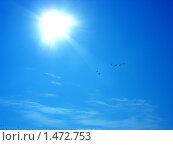 Купить «Чайки в небе», фото № 1472753, снято 16 сентября 2005 г. (c) Кардаков Алексей Игоревич / Фотобанк Лори